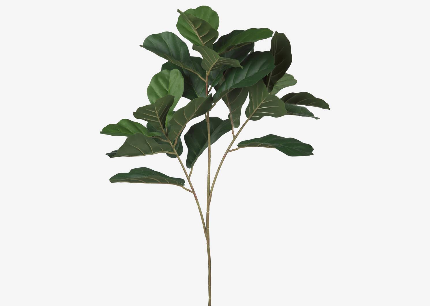 Kani Fiddle Leaf Branch