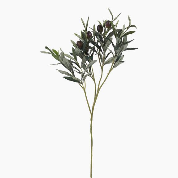 Odelia Olive Branch