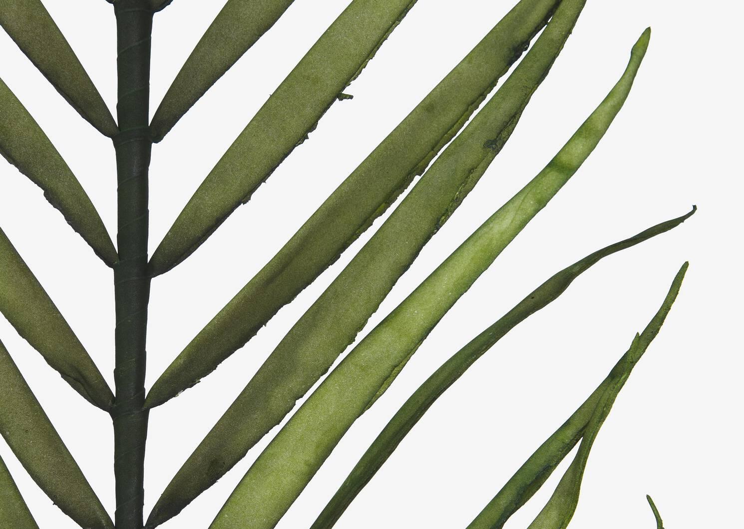Zyla Palm Stem Tall