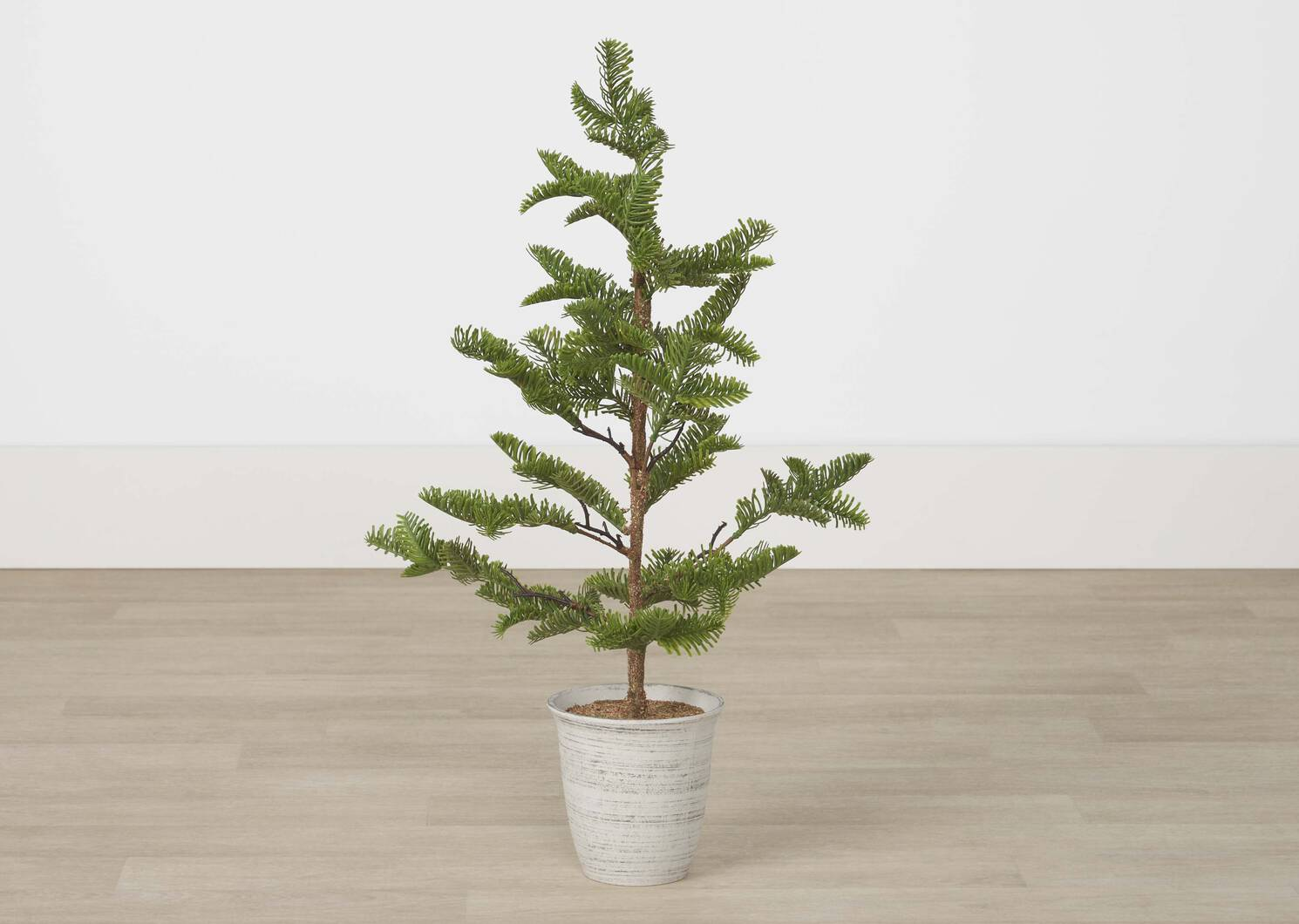 Evergreen Tree Potted