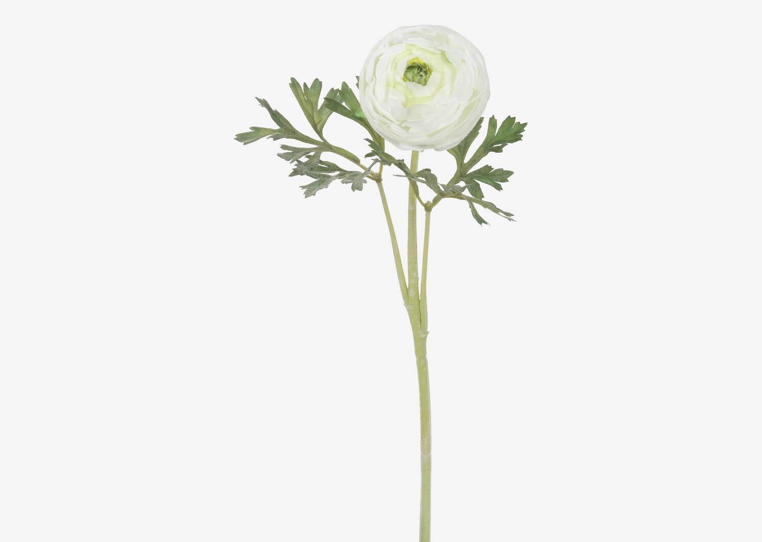 Lyra Ranunculus Stem Cream