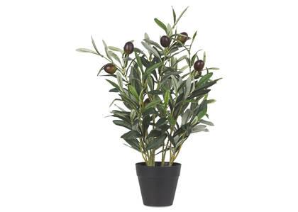 Bouquet d'olivier en pot Tristin