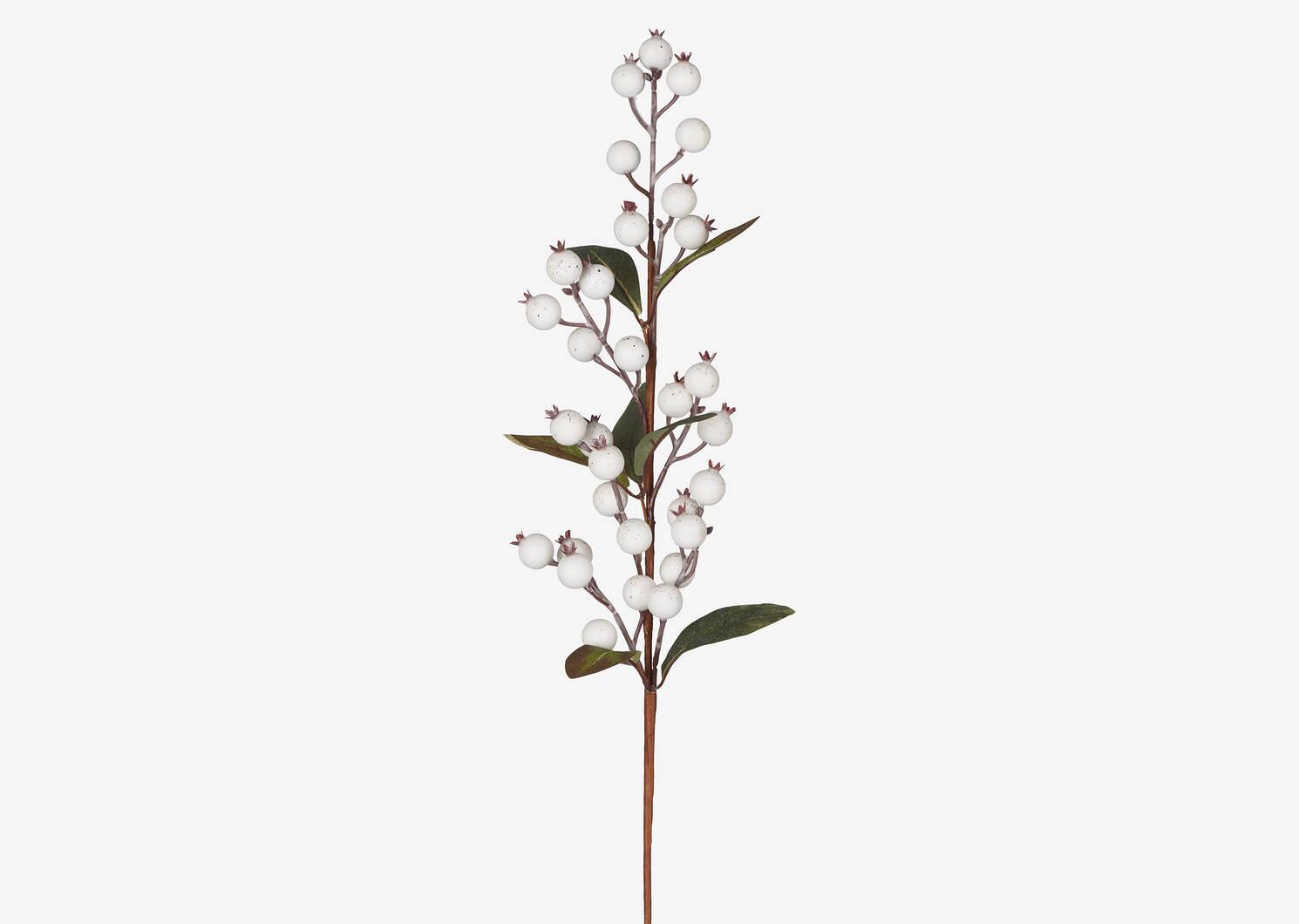 Branche de baies Hawthorn blanches