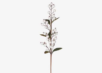 Hawthorn Berry Branch White