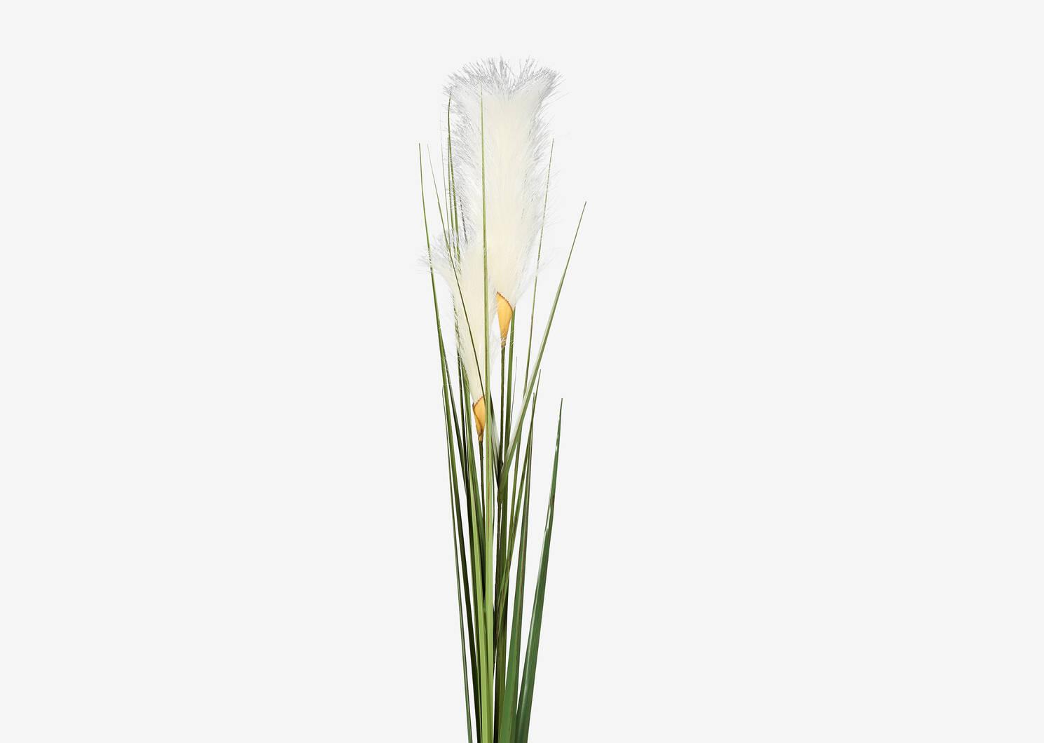 Branche de scirpes Adyn blancs