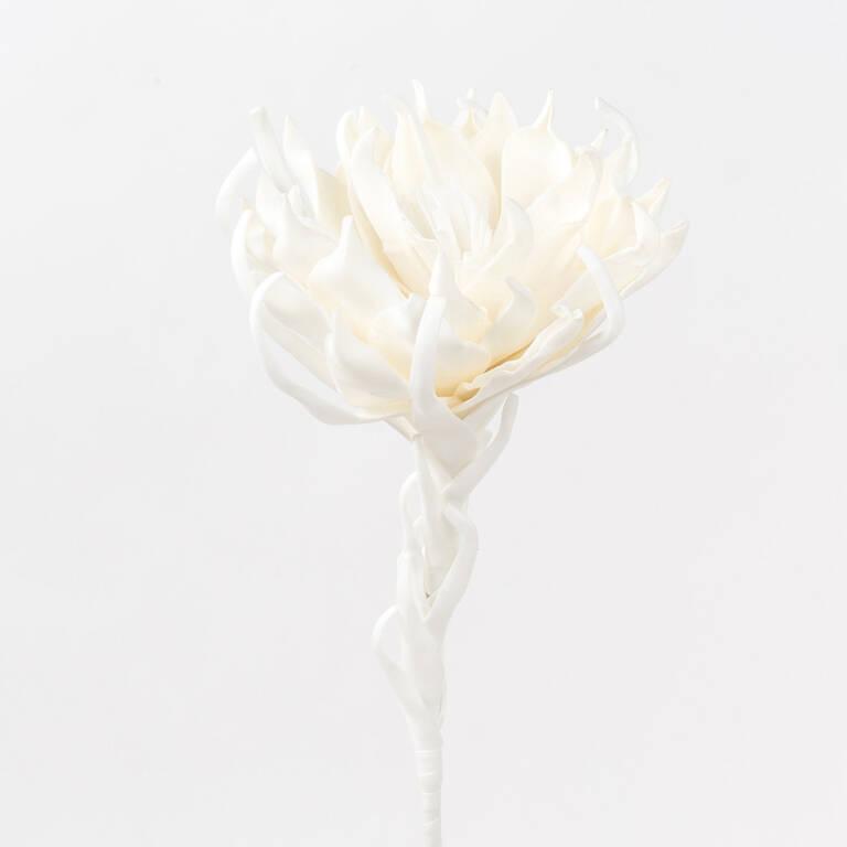 Fleur Ursa blanche