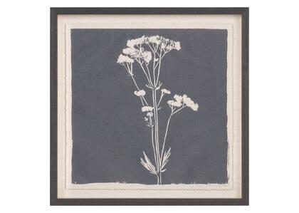 Tableau Common Valerian