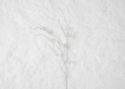 Tige d'hamamélis Snow