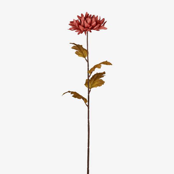 Tige de chrysanthème Albie pétale