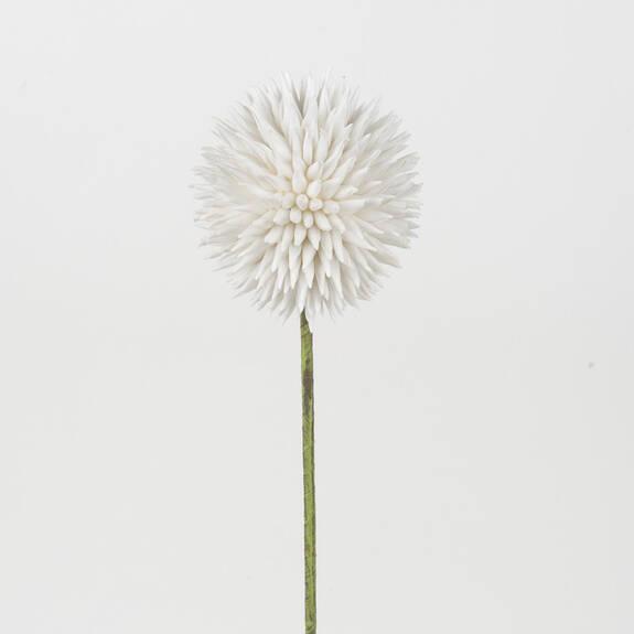 Katniss Allium Stem White