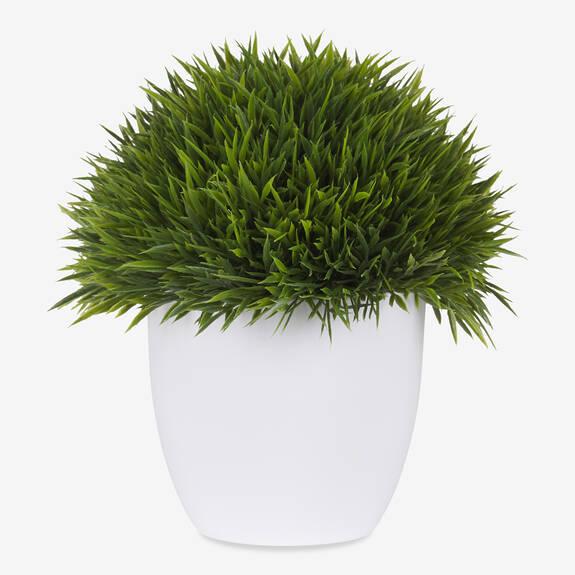 Sena Grass Potted