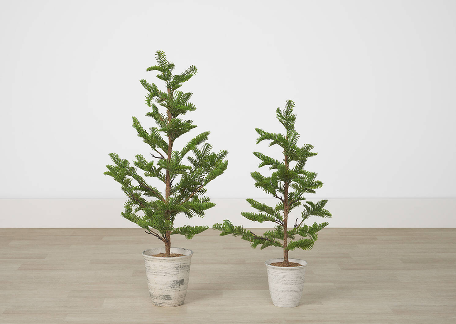 Petit arbre en pot Evergreen