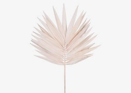 Zyla Palm Stem Wide Pink Salt