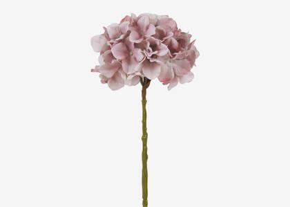 Shae Hydrangea Stem Ballet/Sage