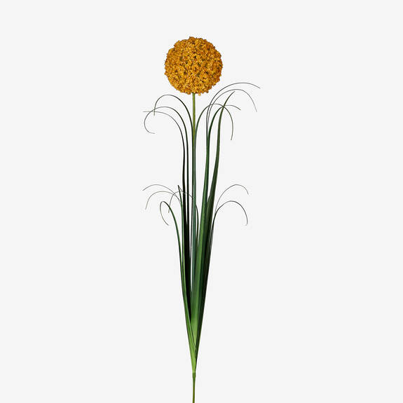 Sachi Allium Stem Goldfield