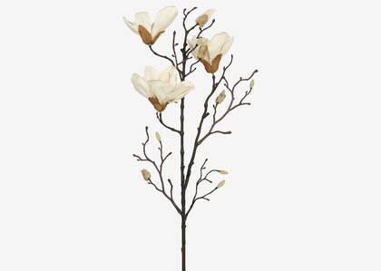 Branche de magnolias Amerie blancs