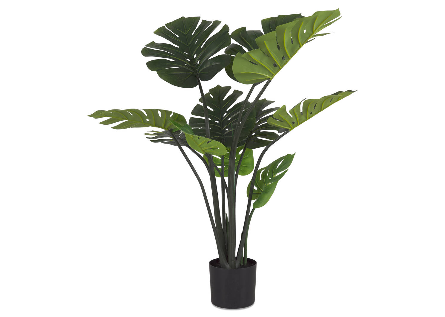 Monstera Plant Potted
