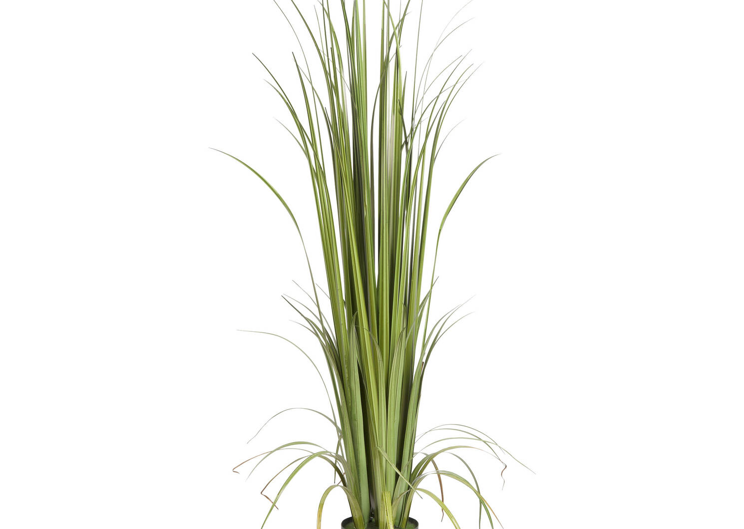 Noble Grass Potted Green
