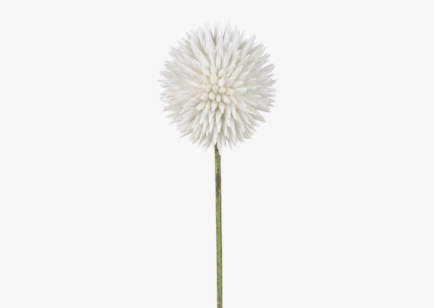 Katniss Allium Stem White