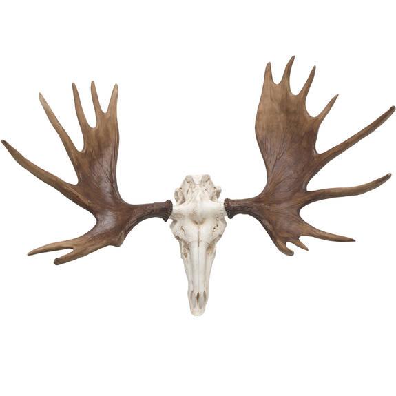 Moose Skull Wall Decor