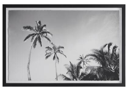 Palm Sky Wall Art