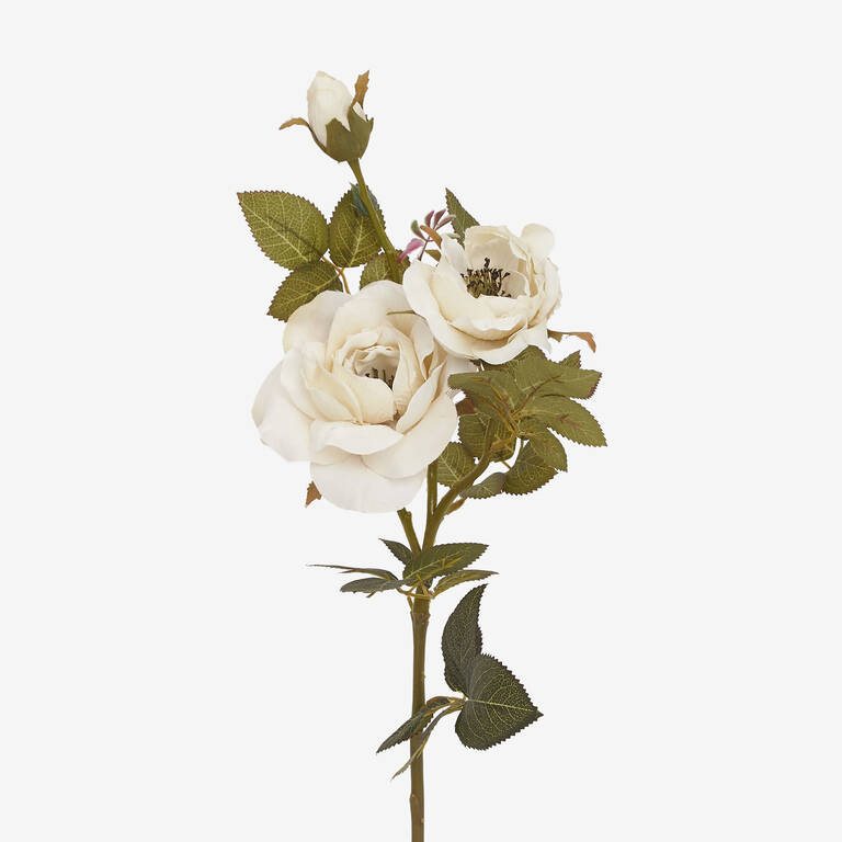 Tige de rose Amora blanche
