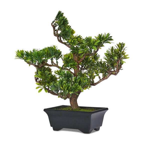 Akiko Bonzai Tree Potted