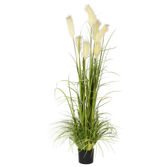 Bodi Pampas Grass Potted Green