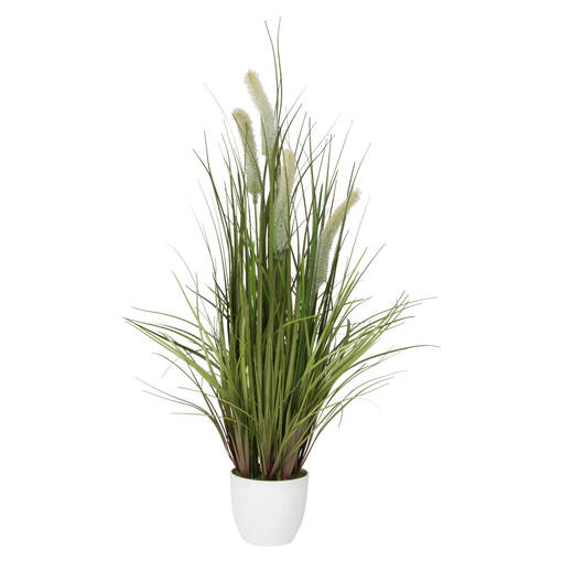 Joshua Grass Potted Green