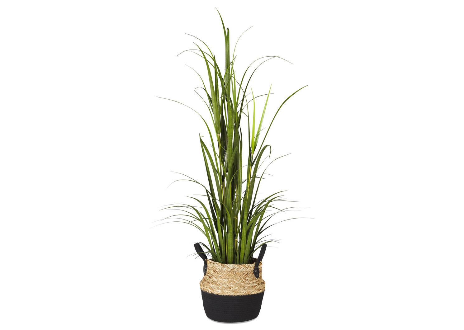 Grandes herbes en pot Martha