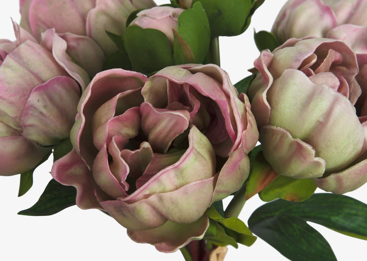 Liliane Peony Bundle Ballet Pink
