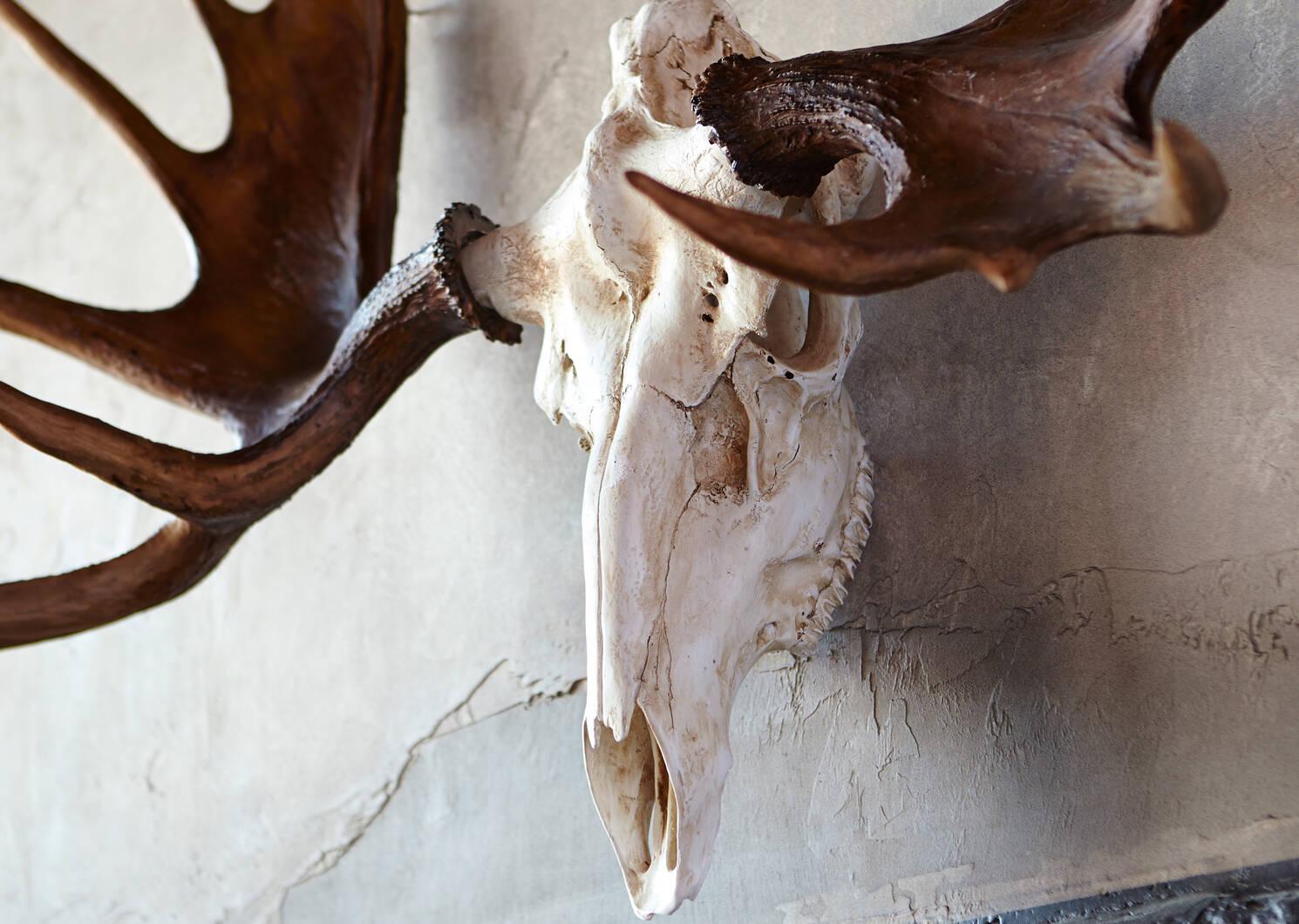 Déco crâne d'orignal Moose