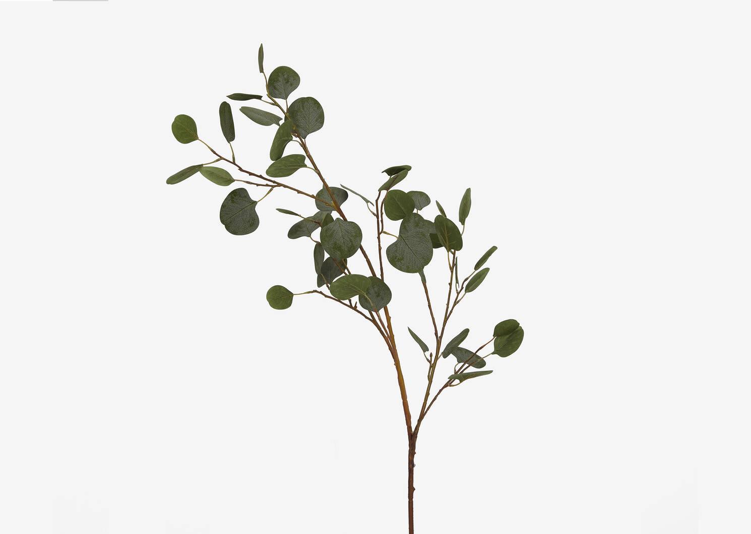 Keimi Eucalyptus Branch