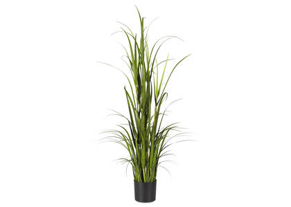 Martha Grass Potted Large