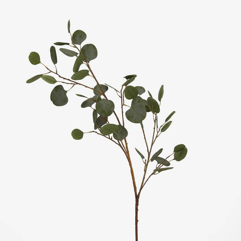 Branche d'eucalyptus Keimi