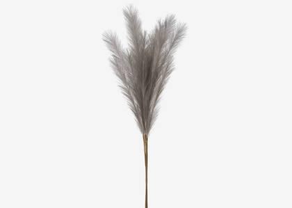 Bouquet herbe de la pampa Marianna gris