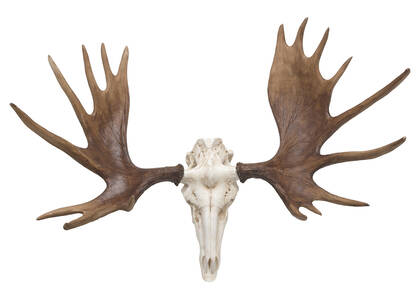 Moose Skull Wall Decor