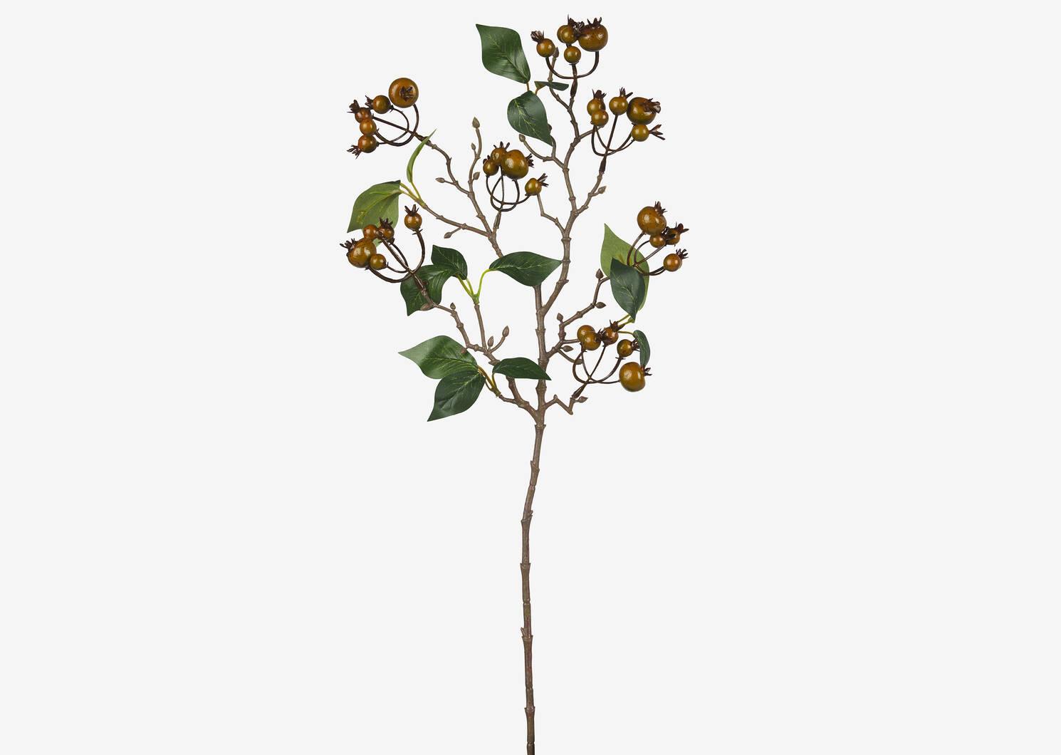 Evelia Berry Branch Moss