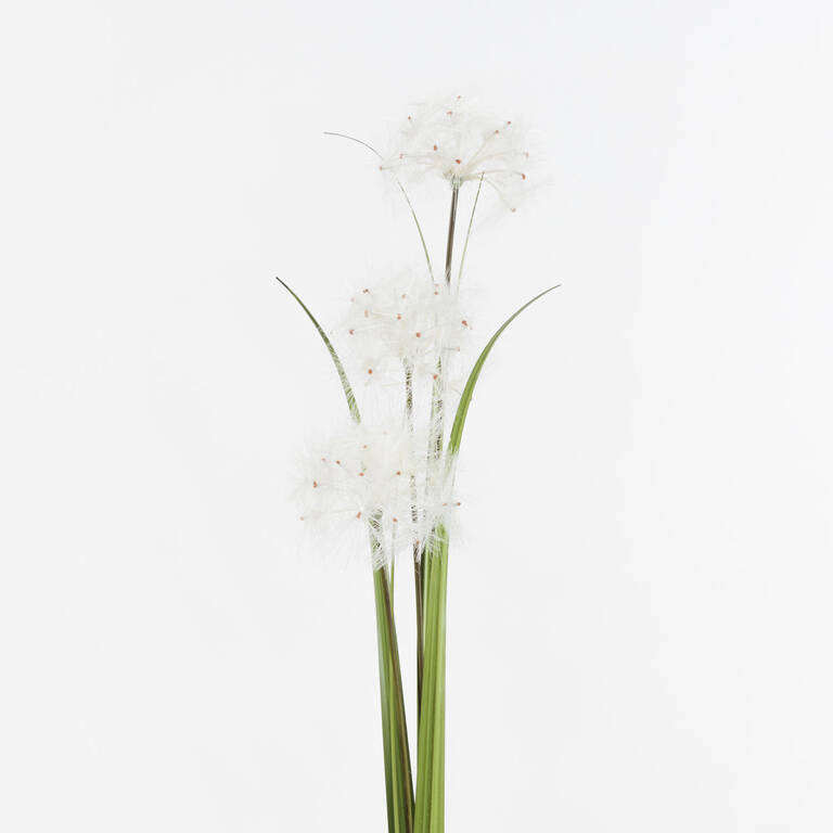 Bouquet de pissenlits Edie blancs