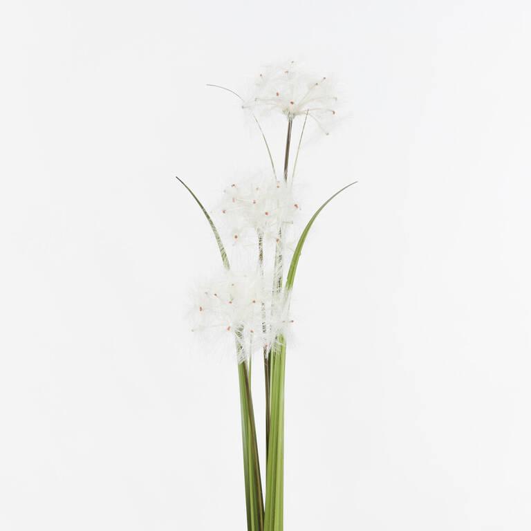 Edie Dandelion Bunch White