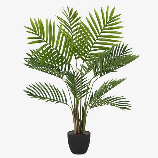Kani Kentia Palm Tree Potted