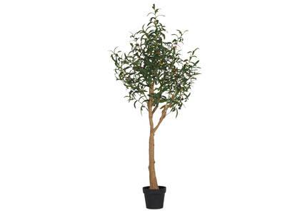 Tristin Olive Tree Potted Large