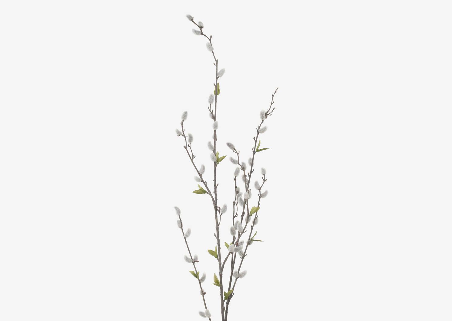 Branche de chatons Jessa gris