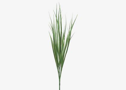 Terrie Grass Stem