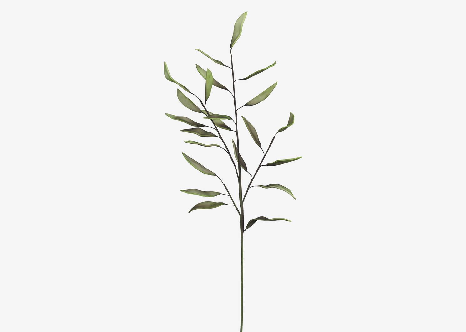 Branche de laurier-rose Lonn