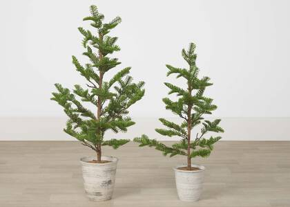 Arbres en pot Evergreen