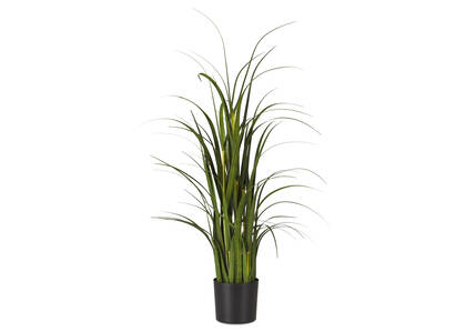 Martha Grass Potted Small