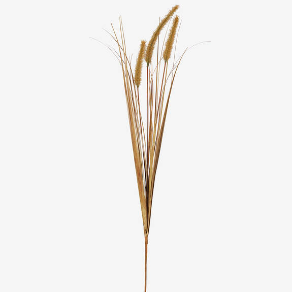 Gere Grass Stem Goldfield