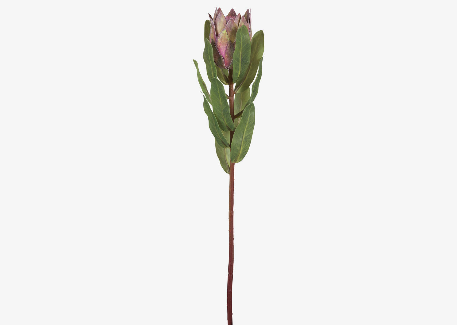 Avelina Protea Stem Clay Pink