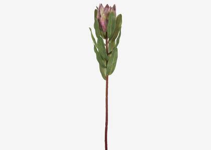 Tige de protea Avelina rose argile